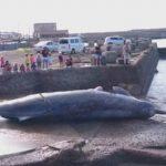 関東ツーリングルート公開:千葉 夏 鯨解体