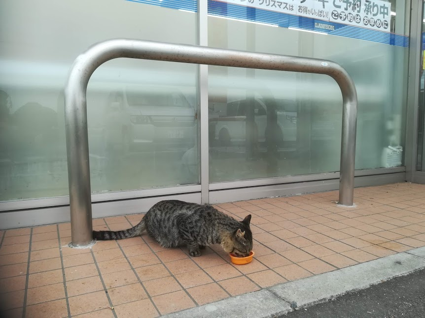可愛い野良猫⑤