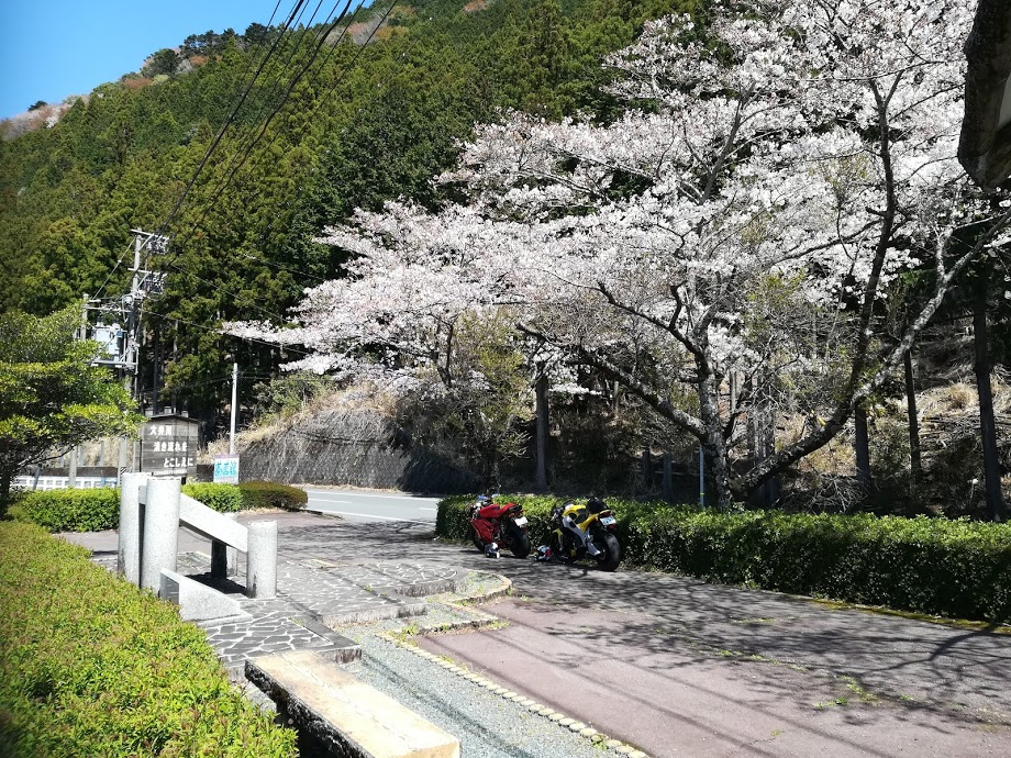 ツーリング先に咲き誇る最高の桜