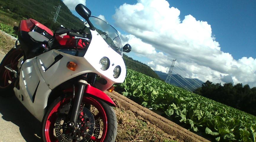 キャベツ畑とVFR400R【NC30】